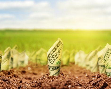 Dinero y cultivo