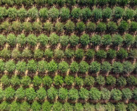 Agricultura de precisión almendro